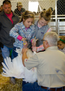 A young girl get helps showing a turkey to a judge