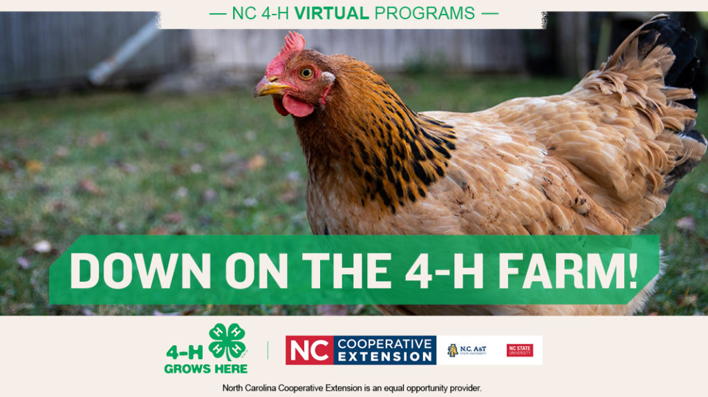 graphic with chicken and text: Down on the 4-H Farm